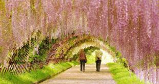 Svibanj proljeće Vjenčanje